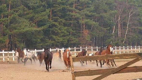 Sonderangebot für die Sommerferien im Ferienclub Lüneburger Heide